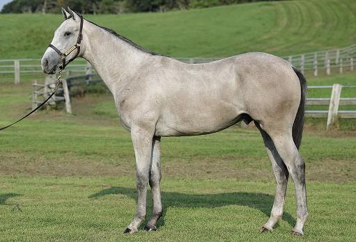 【エイシンポラリスの19】(牡)~血統診断-馬場・距離適性-~ノルマンディオーナーズクラブ